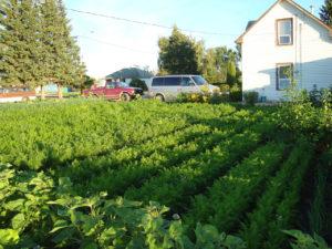 small backyard farm plot
