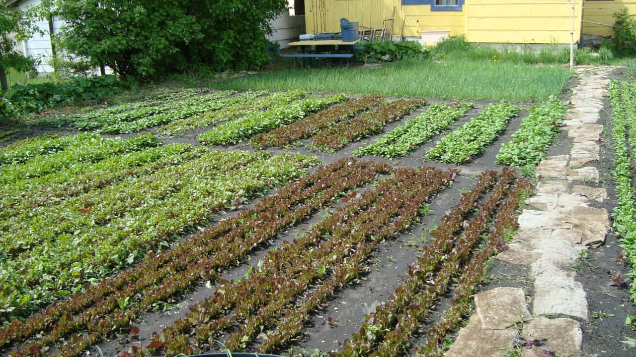 Get Started With Spin Farming - Cornell Small Farms