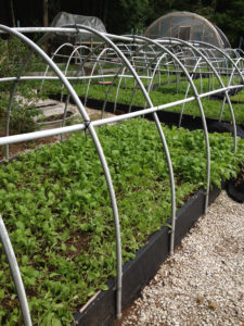 Raised beds with high hoop tunnel framing.