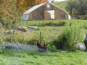 Foggy Brook Farm hoop house