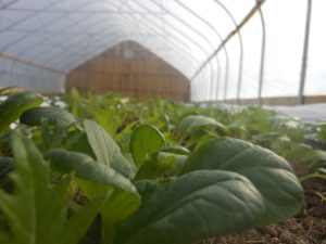 foggy brook farm greenhouse