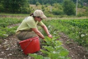 Growing the next HVF Apprentice Harvesting