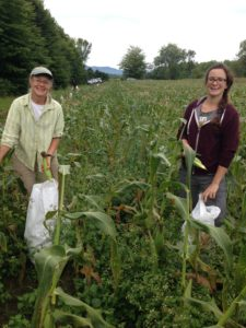 less waste gleaning