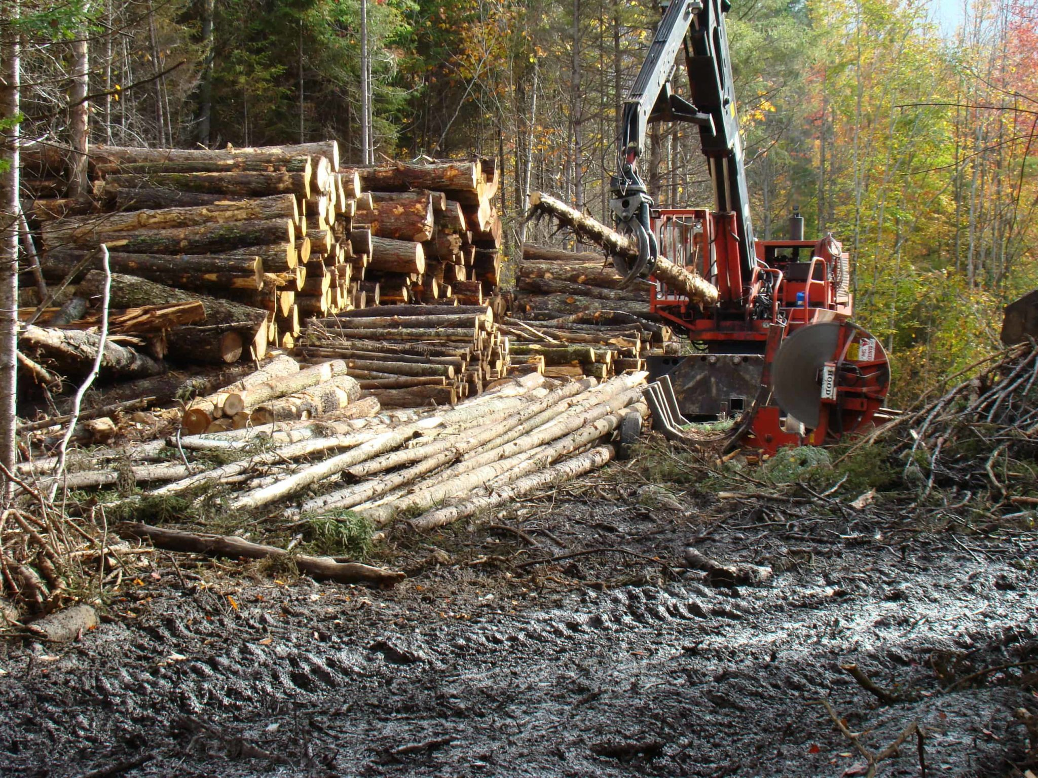 Financial Implications of Selling Timber 1