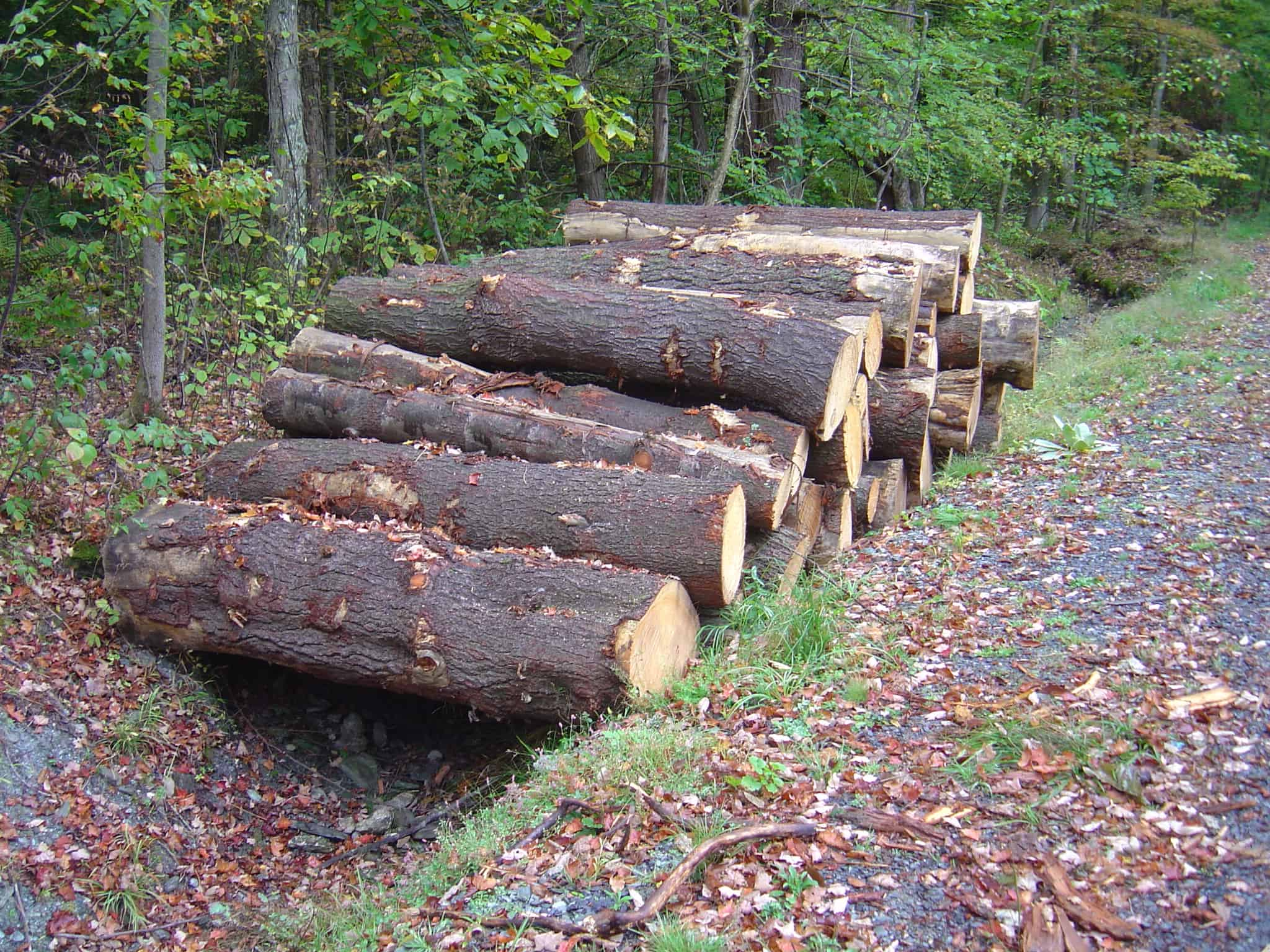 Financial Implications of Selling Timber 3