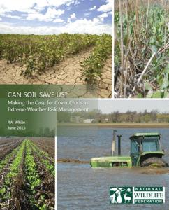 Cover-Crops-Report_Trisha-White_400x495