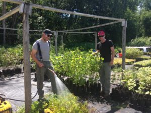 Seth Gillim and Mike Ingalls are managers of the Intervale Conservation Nursery, founded in 2002 and dedicated to growing native, locally sourced trees and shrubs for riparian restoration projects throughout Vermont. Photo by Rachel Carter.
