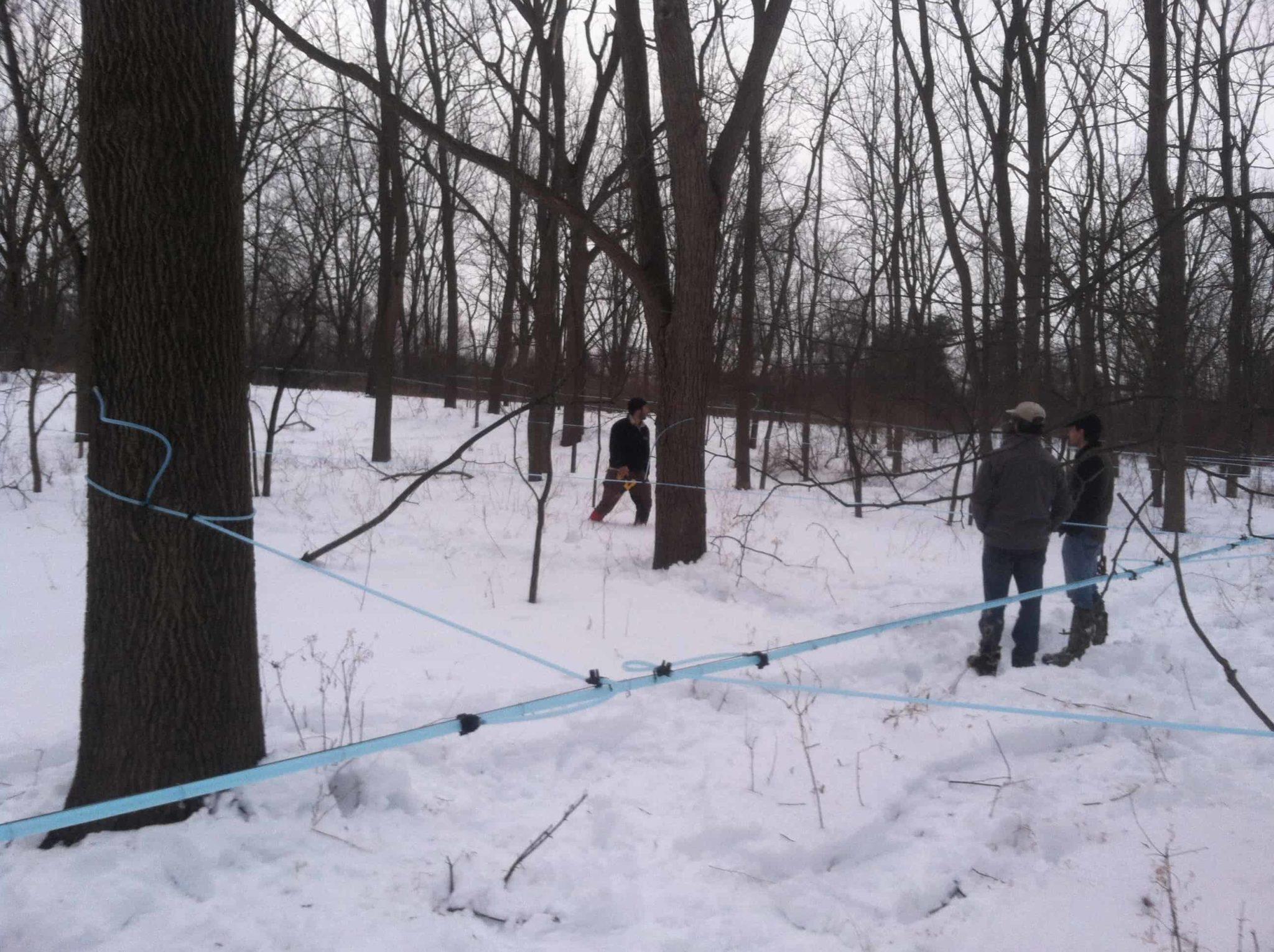 Tapping Walnut Trees for a Novel and Delicious Syrup