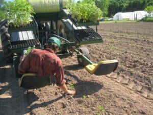 Jonathan transplants tomatoes, spring 2016, at Peacework Farm. Photo by Elizabeth Henderson