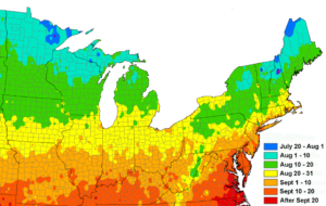 The target planting date has a fairly narrow window that varies across the Northeast. [This map is taken from a research publication. For the purposes of this article we need to make the dates 10 days earlier.]