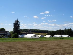 Overlooking greenhouses at Main Street Farm