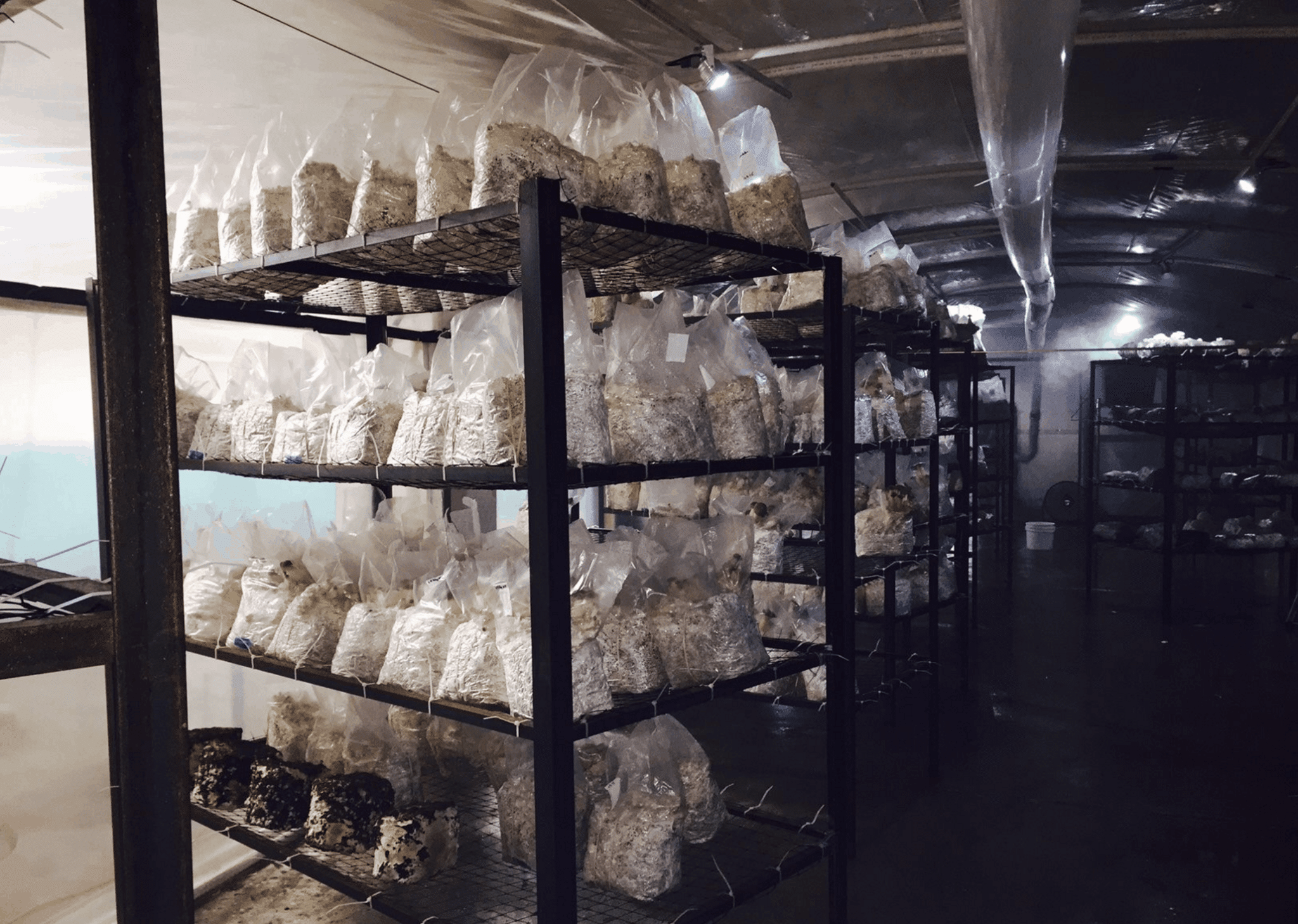Mushrooms Are Fruiting in Philadelphia - Cornell Small Farms