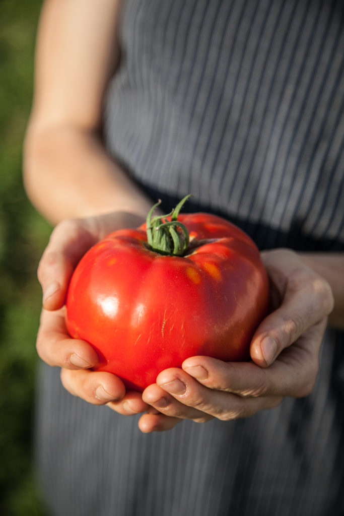 a large red tomato in a person's hands