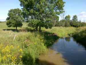 creek in pasture