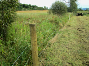 fencing outside pasture