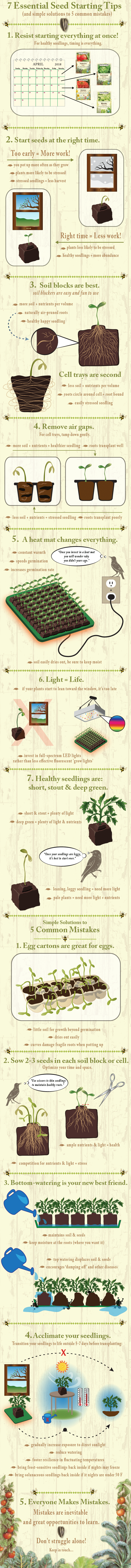 infographic on seed starting practices