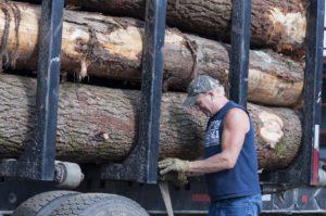 Man loading logs on truck.
