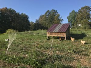Coop of chickens.