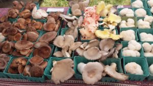 containers of specialty mushrooms displayed at farmers market