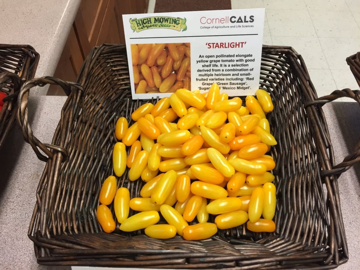 a basket of small yellow grape tomatoes