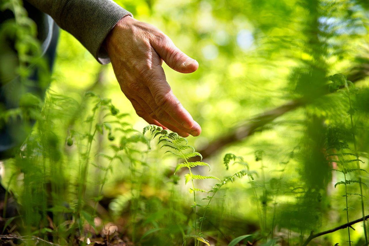 A hand reaches toward a forest floor.