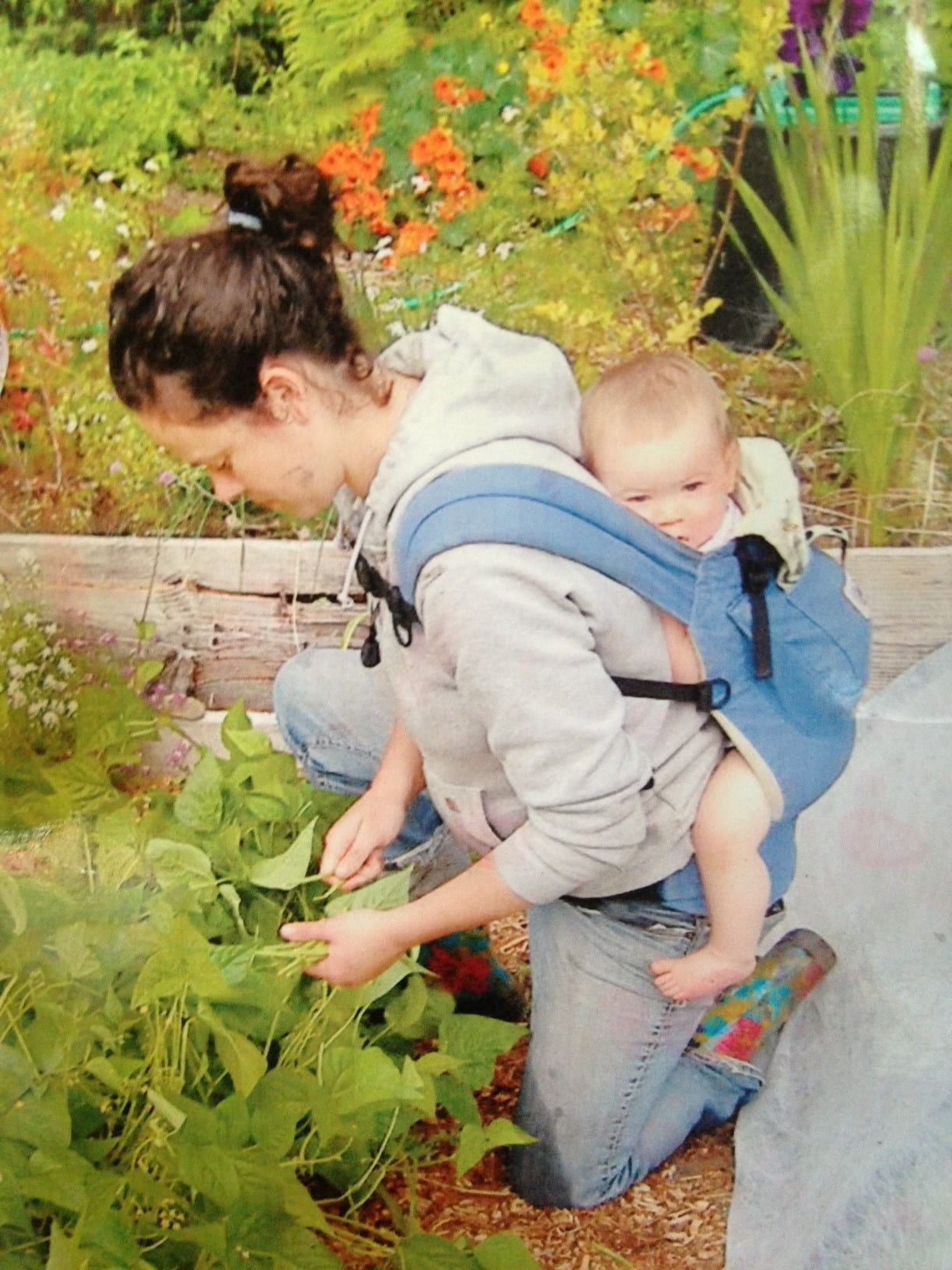 A person with a baby strapped to their back as they pick beans