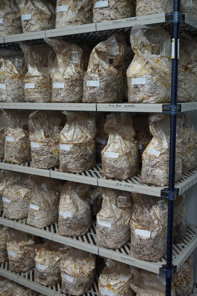 Mushroom cultivation at scale