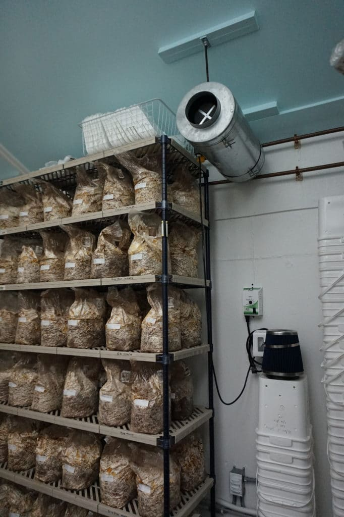 Indoor mushroom farm in New York