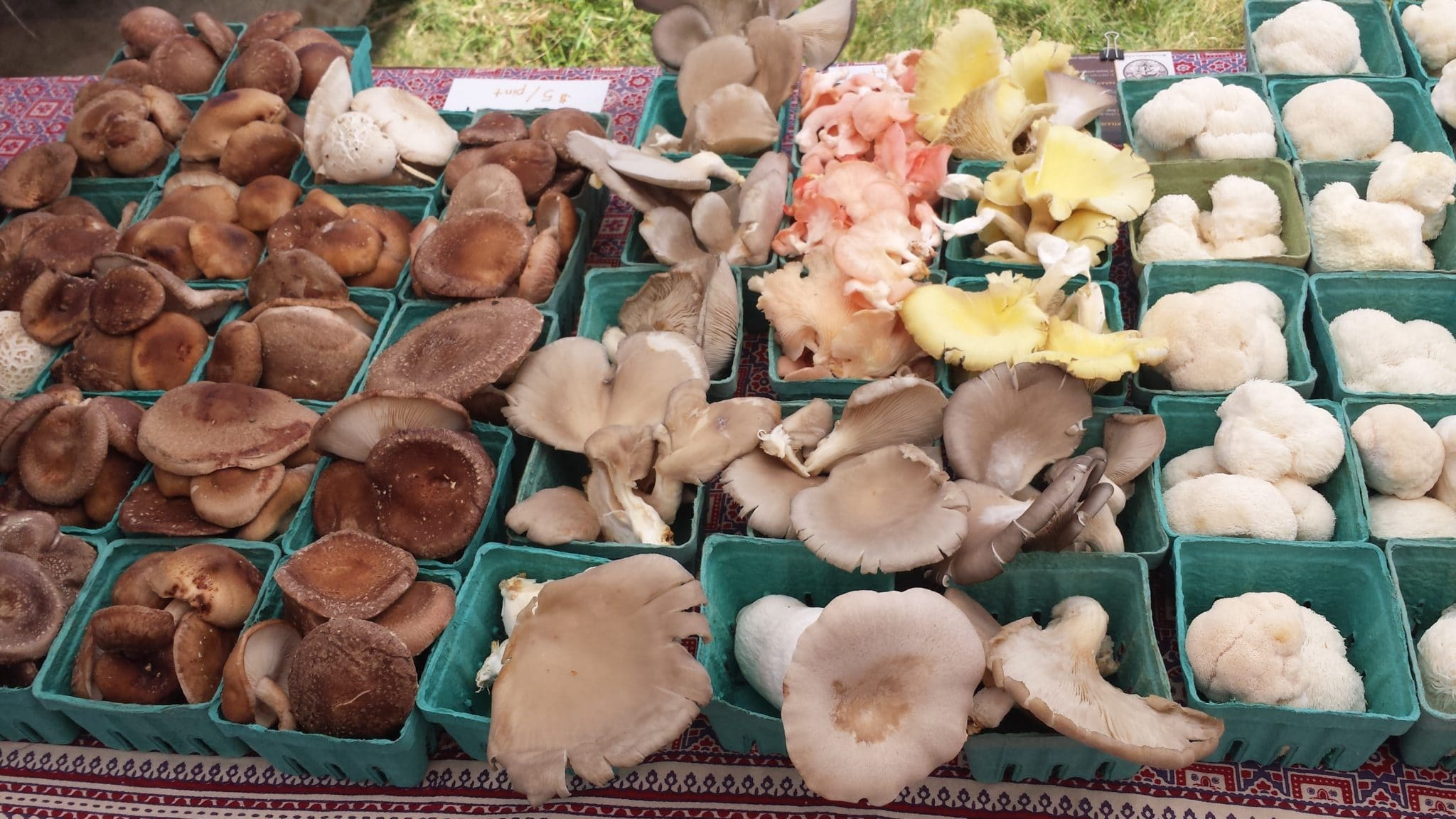 Mushrooms at Farmers Market (photo credit: Willie Crosby, Fungi Ally)