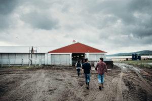 cals dairy farmland