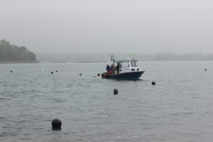 seaweed shellfish farming photo 1