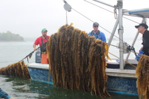 seaweed shellfish farming sfq fall 2019