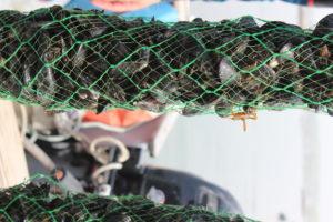 sfq fall 19 seaweed