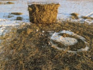 hay feeder wasted hay