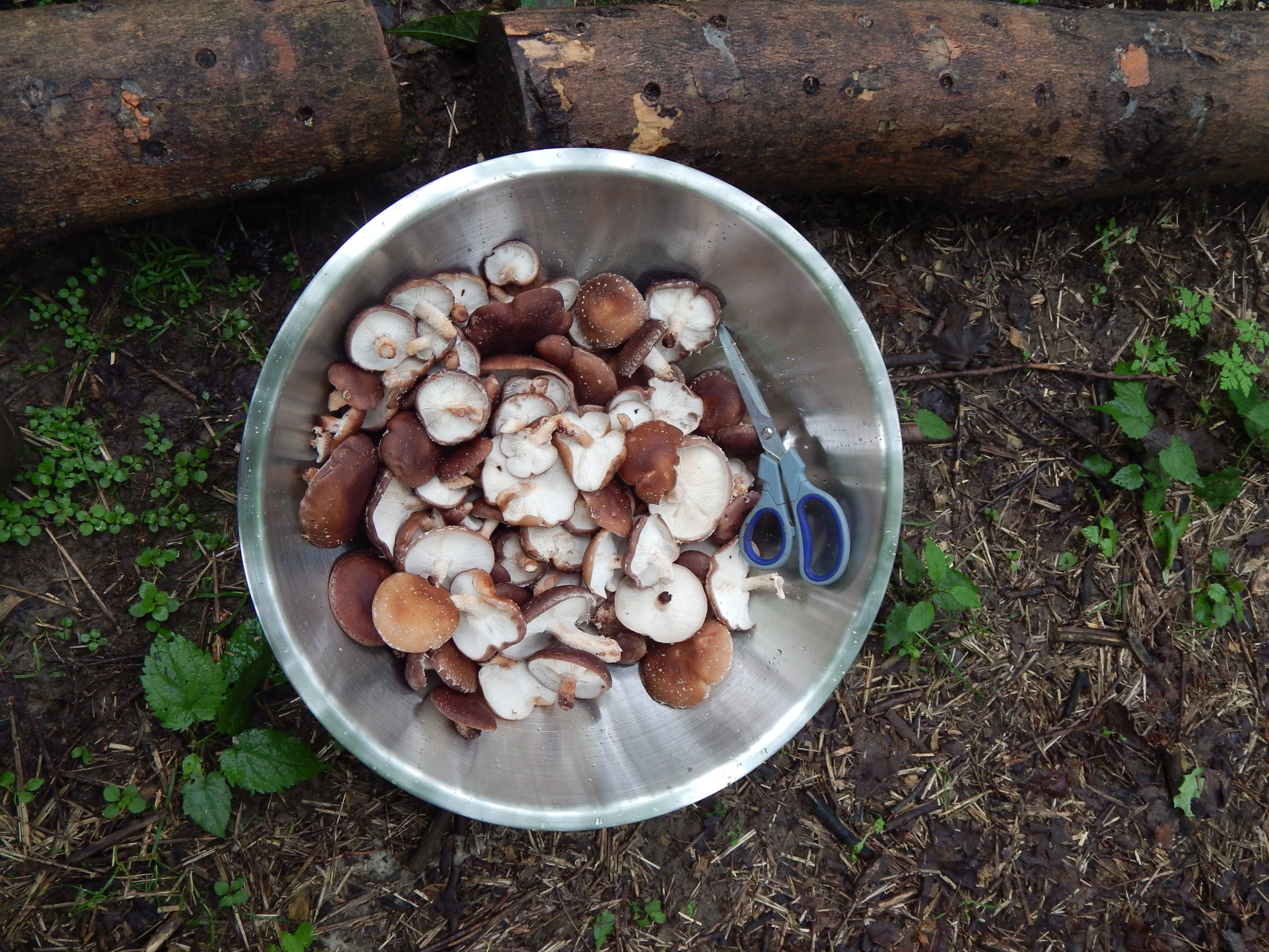 Use scissors to cut mushrooms instead of a knife.