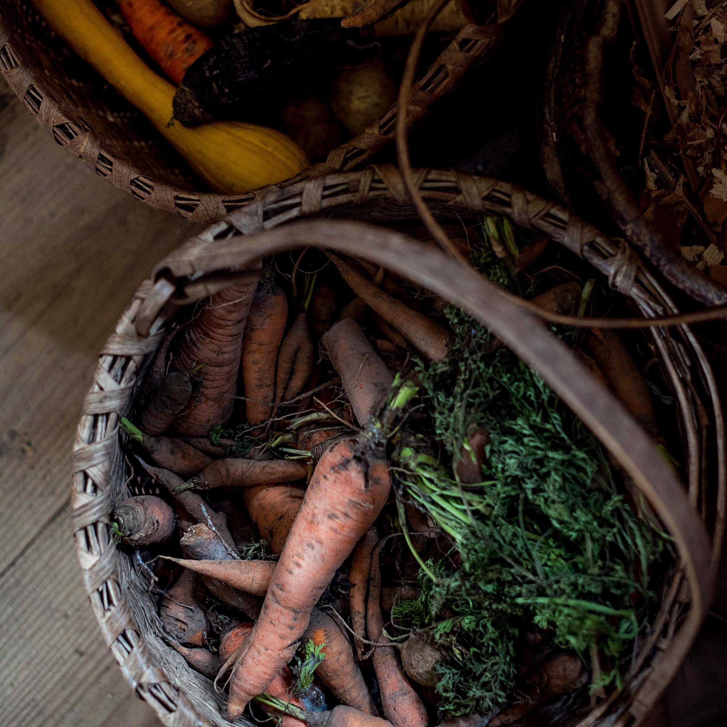 carrot-harvest-basket-insta