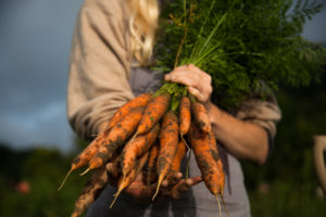 A farmer holds a bouquet of carrots just pulled from the ground.
