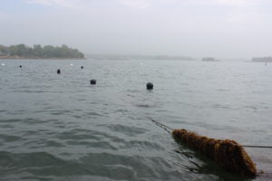 The view of a kelp farm from above; besides a few buoys, it could be mistaken for untouched ocean.