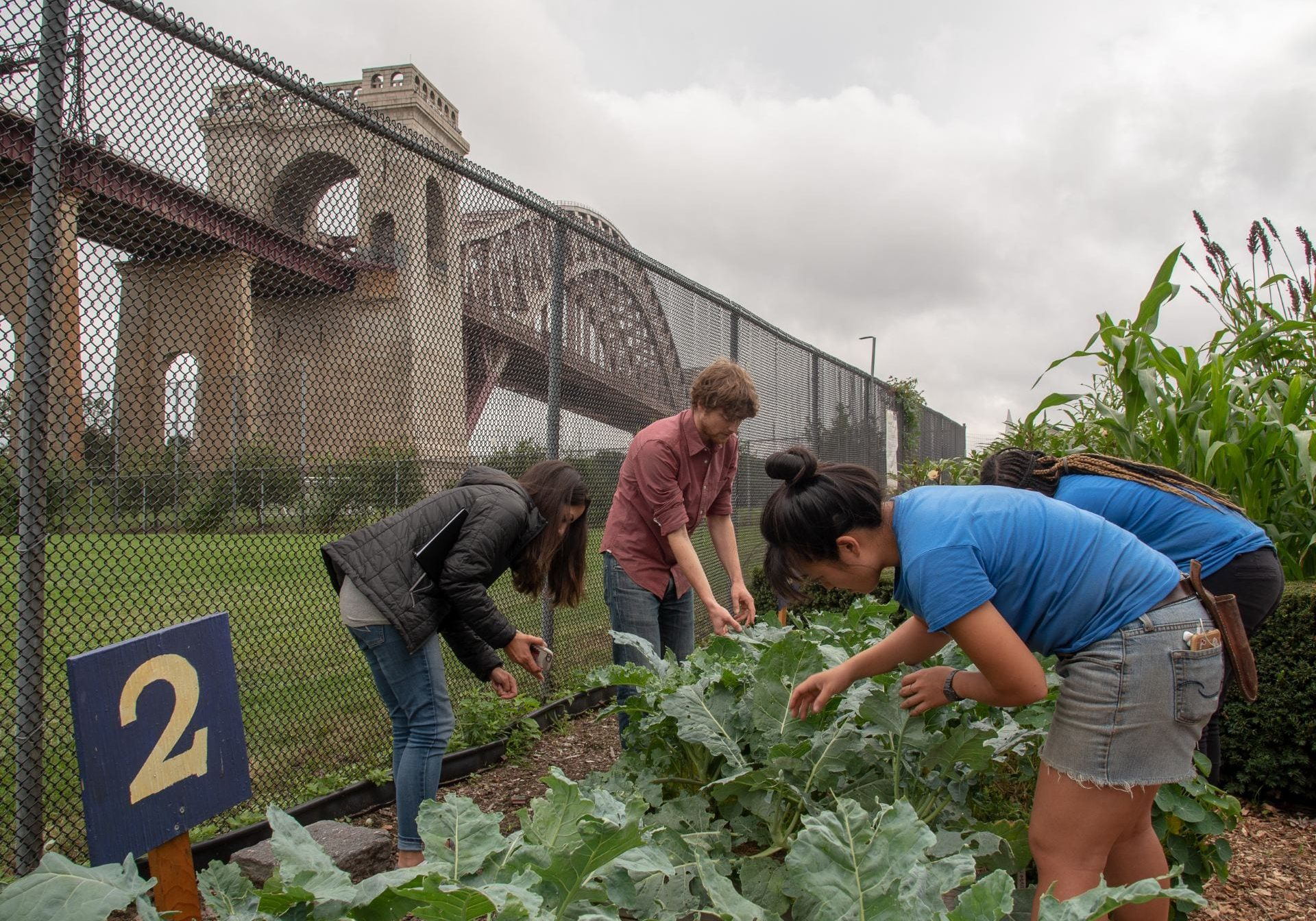 In the shadow of New York City's Hell Gate Bridge, Cornell Cooperative Extension urban agriculture specialists Yolanda Gonzalez, left, and Sam Anderson, center scout for harlequin bugs and consult with farmers at Randall's Island Urban Farm in New York City. R.J. Anderson / Cornell Cooperative Extension