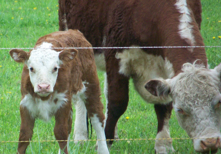 I love my pasture!  Photo by Denise Timms