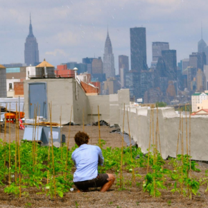 guide-urban-ag-nys-cover-crop-roof-garden