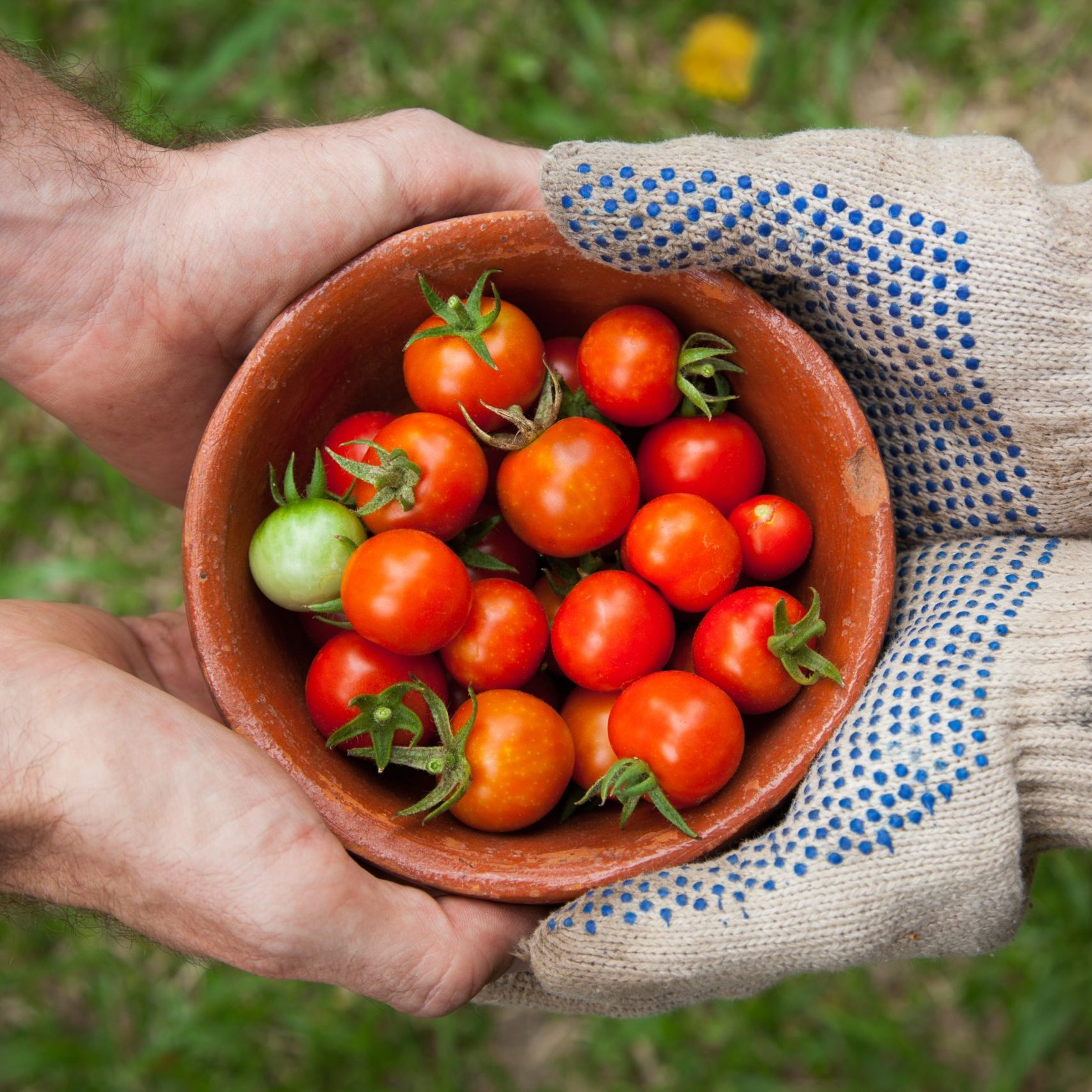 hands-sharing-tomatoes-unsplash